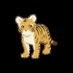 Kisa - Tiger