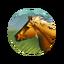 Icon Horses