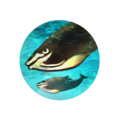 Icon Whales.png