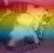 RAINBOW KITTIES