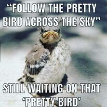 That Bird is Pretty!