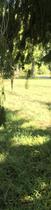 Screen Shot 2020-06-28 at 7.42.28 PM
