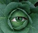 Sentient Cabbage