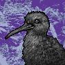 Kiwi Portrait M