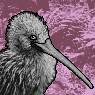 Kiwi Portrait F