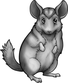 Avatar-0001-Butlers-0002-0001-Seasonal Chinchilla