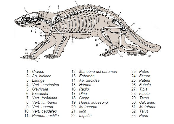 Furoanatomía | Wiki Furopedia | FANDOM powered by Wikia