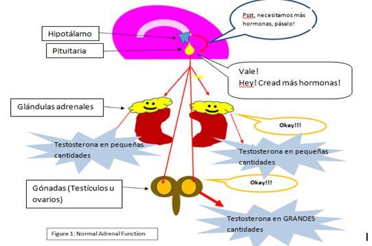 La Enfermedad Adrenal | Wiki Furopedia | FANDOM powered by Wikia