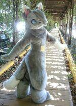 貓狐風寒 Kazesamu