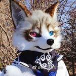 布偶狐DK