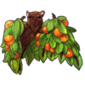 1825-orange-fruit-tree-bat