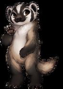 188-14-american-badger