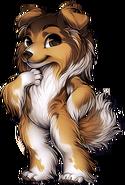 Canine shetland sheepdog