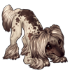 3418-cocoa-dusted-crested-pup