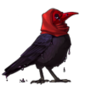 3384-hooded-raven-plague-bird