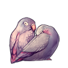 4331-pale-dusk-lovebirds