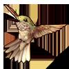 611-brown-hummingbird