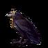 4900-monocle-wearing-raven