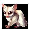 1155-albino-sugar-glider