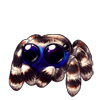 4246-striped-jumping-spider