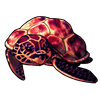 318-lava-turty