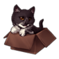 3585-tuxedo-cat-in-the-box