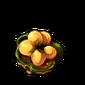 4785-armoured-hyenacinth-seed