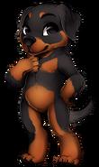 Canine rottweiler