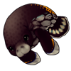 1569-spotted-manatee