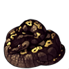 638-black-pastel-ball-python