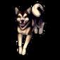 453-husky-doge