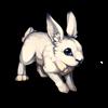 181-winter-hare