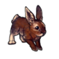 461-summer-hare