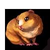 631-cream-guinea-pig
