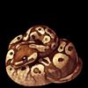 637-normal-ball-python