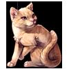 2998-friendly-ginger-tabby