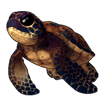 Cave Sea Tortle