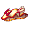 Fire-nudibranch