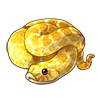 2104-albino-hognose