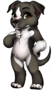 Canine pitbull