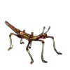 5112-forest-decay-phasmid