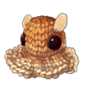 2649-braided-dumbo-octopus