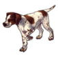 2240-spotted-english-pointer