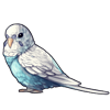 4215-sky-blue-spangle-budgie