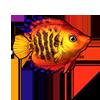 603-striped-angelfish