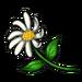 3174-lost-daisy