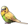 4217-light-green-opaline-budgie