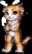 Cat-scottish-fold
