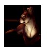 723-brown-chihuahua
