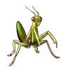 2108-green-mantis